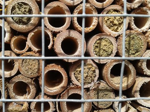 Over de bloemetjes en de bijtjes…