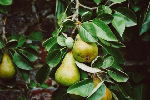 Meer natuur voor pittig fruit: Opendeurdag fruittteelt
