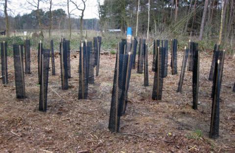 Aanplant bomen: toekomstig kwaliteitshout uit topnatuur
