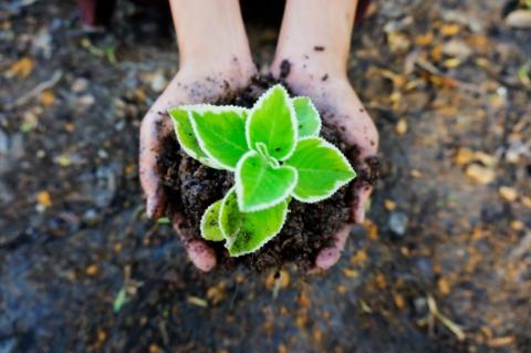Inspiratieplatform bodemvriendelijke innovaties