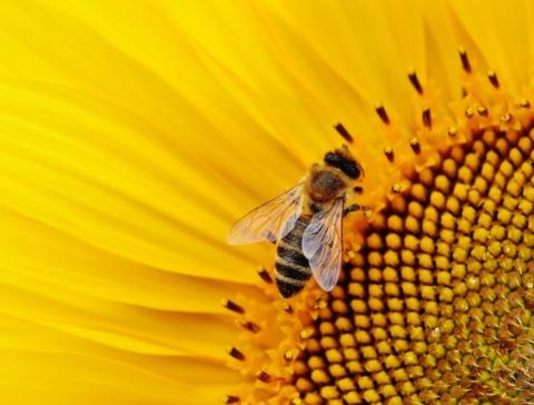 Infoavond: Wilde bijen in de Glabbeekse wegbermen