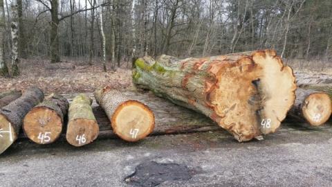 eco2eco: gaankwaliteitshout en biodiversiteit hand in hand?