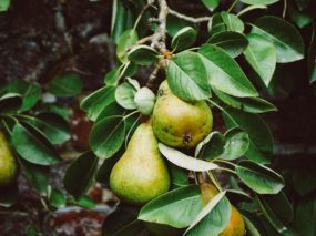 save the date: slotevent Meer natuur voor pittig fruit