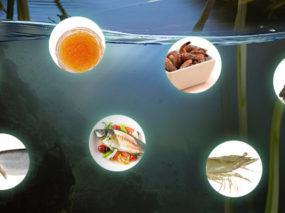 Klankbordgroep aquacultuur