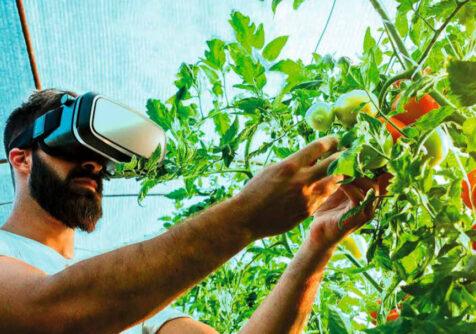 AgrEUfood: bacteriën opsporen met slimme sensoren