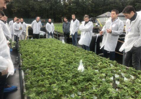 Duurzaam gekweekte aardbeien dankzij RECUPA