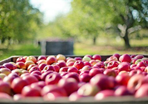 Eten in de grensregio: een vruchtbare toekomst