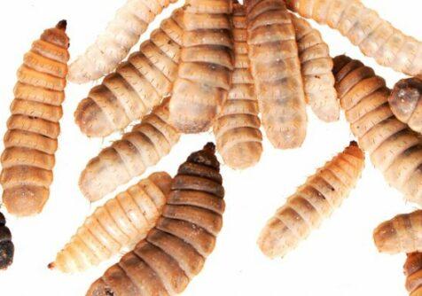 Entomospeed: Trendcollege - kennismaking met de insectenketen
