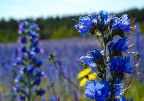 Growing a Green Future: Inspiratiesessie hoogwaardige oliën