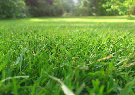 Cursus Grasgoed - NGAG: verdiep je in het beheer van graslanden