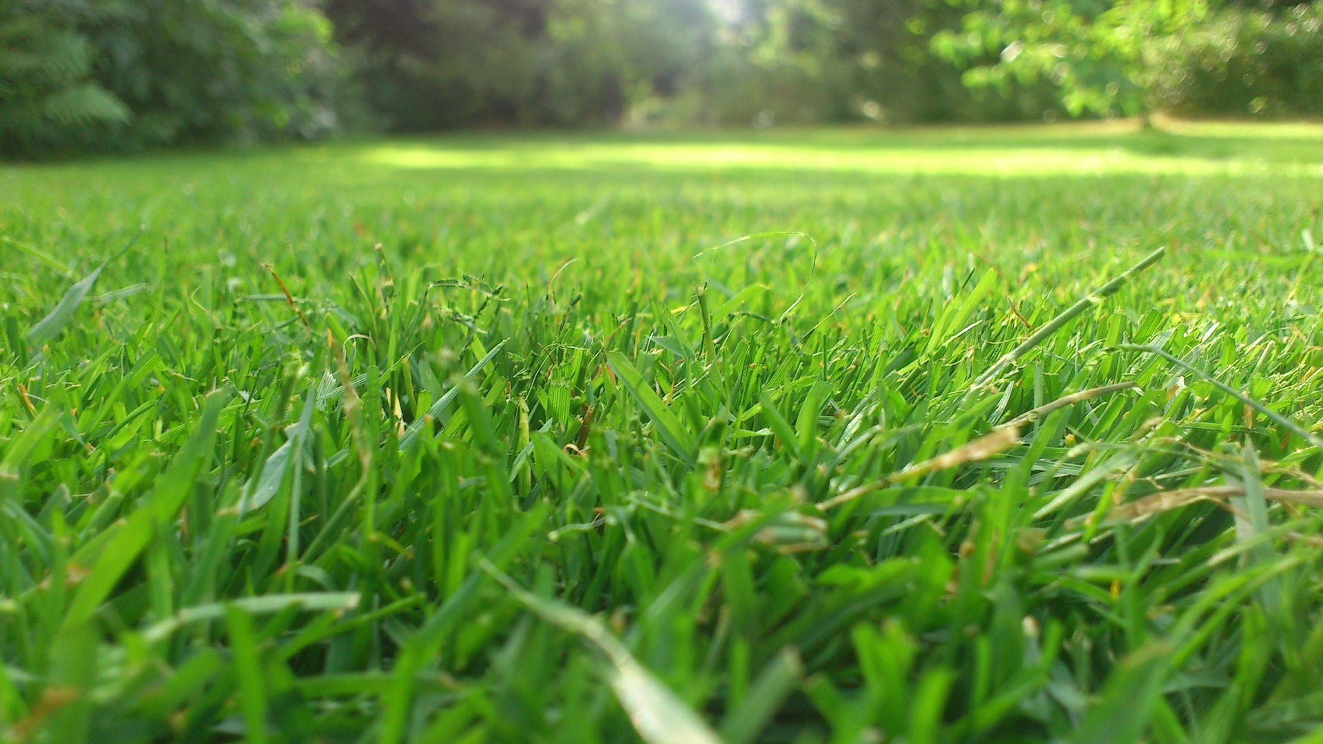 Grasgoed gemaaid gras krijgt een tweede leven als paaltje for Hierba jardin