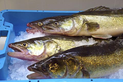 AquaVlan2: doordacht ondernemen in aquacultuur