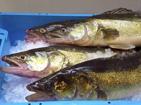 save the date: doordacht ondernemen in aquacultuur